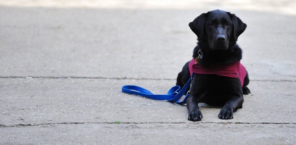 Light Into Europe - Guide dogs for the blind - Photo by Alin Popescu