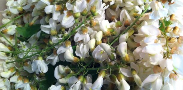 Clatite cu flori de salcam